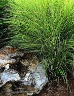 grasses tile image, subsection of products