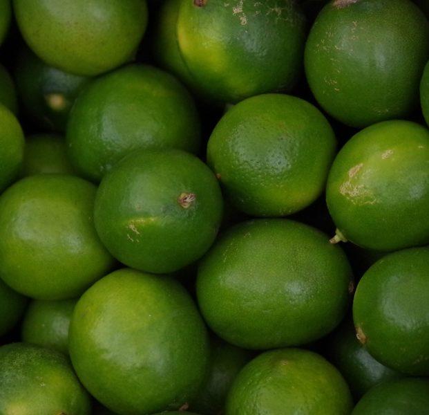 mexican key lime semi dwarf