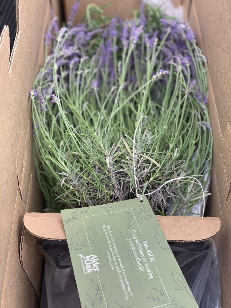 purple plant image